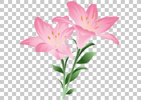 花,粉红色百合,粉红色的花瓣PNG剪贴画插花,摄影,植物茎,桌面壁纸