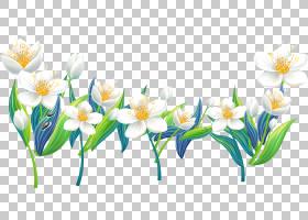 花,莉莉的PNG剪贴画插花,白色,电脑壁纸,百合,花卉,春天,花瓣,植