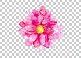 花卉水彩绘画绘画,水彩墨花,粉红色花瓣PNG剪贴画插花,彩色飞溅,