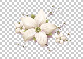 花卉设计,花卉,三个白色花瓣PNG剪贴画插花,白色,ifwe,封装PostSc
