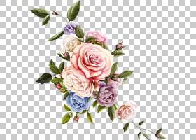 花卉设计玫瑰图画,美丽的花,桃红色和绿色花艺术PNG clipart插花,
