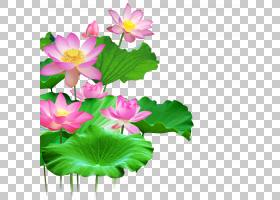 墙上莲花,莲花,粉红色的花朵PNG剪贴画草本植物,插花,叶,中国风,