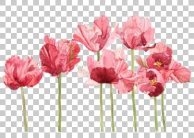 水彩画郁金香水彩:花卉艺术,绘画PNG剪贴画人造花,颜色,植物茎,