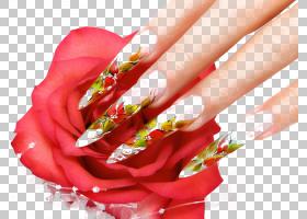 指甲艺术指甲油修指甲美容院,欧洲指甲PNG剪贴画手,化妆品,花,指图片