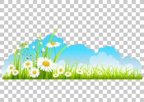 春天,春天装饰天空草和甘菊,白色花瓣PNG剪贴画演示文稿,电脑壁纸