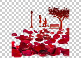 海滩玫瑰花瓣花BlackSalt,玫瑰植物海报PNG剪贴画爱,植物学,摄影,