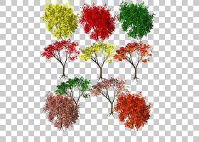 枫叶秋叶颜色秋叶颜色红,秋叶季节PNG剪贴画冬天,叶,枫叶,分支,树图片