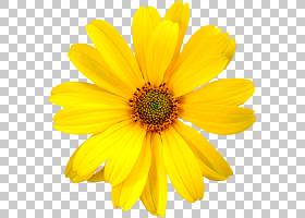 梅尔卡多牙买加花玫瑰黄色花艺设计,黄色的花朵,黄色的菊芋花PNG