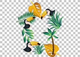 植物欧几里德针叶树,夏季植物海报PNG剪贴画叶,分支,海报,植物茎,