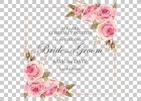 玫瑰粉红色的花朵,美丽的玫瑰邀请设计素材,蓝色背景与黑色文本覆