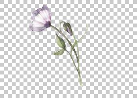 水彩画,水彩花卉PNG剪贴画紫色,蓝色,水彩叶子,墨水,插花,画,手,