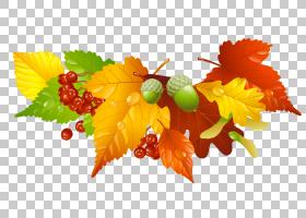 秋天叶子颜色,秋叶和橡子装饰,红色和棕色叶子PNG clipart叶,剪贴