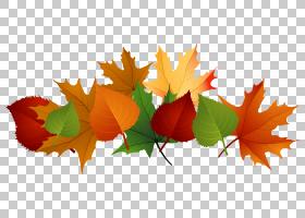 秋天叶子颜色,秋天叶子,棕色和绿色槭树和树叶子PNG clipart图像