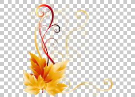 秋天叶子颜色,透明秋天叶子装饰,黄色花卉艺术品PNG clipart插花,