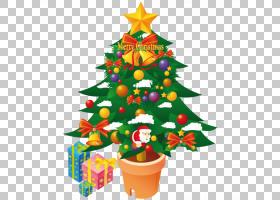 冷杉常青圣诞节装饰杉木家庭花盆,圣诞树,绿色圣诞树PNG clipart图片