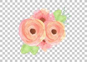 Deidre Caswell摄影花束,桃花PNG剪贴画插花,婴儿,花卉,家庭,粉红图片