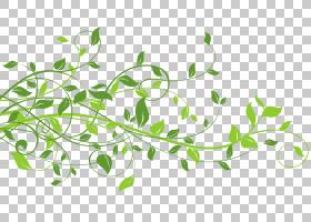 叶子,春天装饰用叶子,绿色叶子PNG clipart文本,枫叶,剪贴画,分支