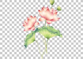 四川法轮功春节幸福爱,善良,传统莲花PNG剪贴画草本植物,插花,愿