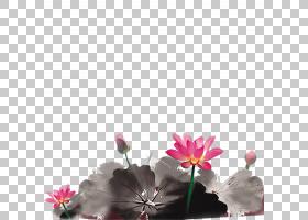 中国画中秋节摄影水墨画,古典莲花PNG剪贴画水彩画,插花,中国风,