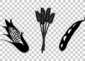 作物农业玉米大豆,大豆茎的PNG剪贴画食品,单色,草,农场,谷物,大