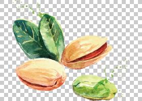 水彩绘画绘图坚果,开心果PNG剪贴画食品,食谱,生日快乐矢量图像,
