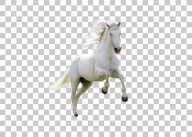 马,产品物理跑马PNG剪贴画马,动物,母马,跑步,马Tack,封装PostScr