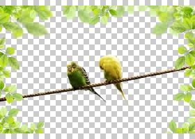 鹦鹉景观,鹦鹉PNG剪贴画动物,海报,分支,长尾小鹦鹉,电脑壁纸,动