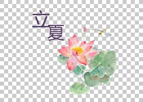 水彩画荷花蜻蜓背景立夏PNG素材