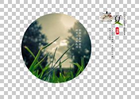 自然青草背景立夏PNG素材