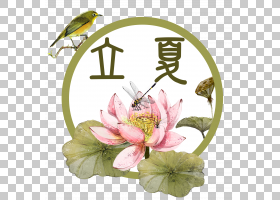花鸟昆虫背景立夏PNG素材