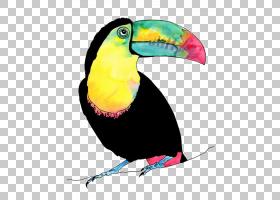 爱情鸟鹦鹉巨嘴鸟,鹦鹉PNG剪贴画水彩画,动物,长尾小鹦鹉,动物群,