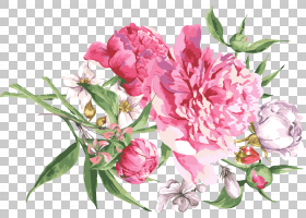 Get-well卡问候卡和笔记本希望电子贺卡,手绘花卉PNG剪贴画爱情,
