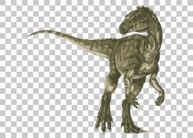 Heterodontosaurus暴龙Velociraptor甲龙剑龙,恐龙PNG剪贴画手,动