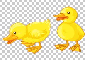 Baby Ducks美国Pekin,鸭PNG剪贴画画,动物,手,脊椎动物,唐纳德鸭,