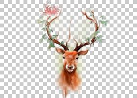 Deer Elk Moose纹身纸,彩色驯鹿头PNG剪贴画鹿茸,颜色飞溅,冬天,