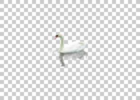 Cygnini Falcated鸭子,鸭子PNG剪贴画动物,蓝绿色,动物群,卡通,唐