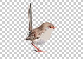 W Bird鸟水彩画绘画,卡通小麻雀PNG剪贴画卡通人物,动物,海报,鸣