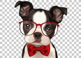 法国斗牛犬波士顿梗哈巴狗小狗,小狗PNG剪贴画哺乳动物,动物,食肉
