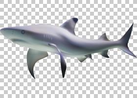 虎鲨鱼,鲨鱼海底着色材料PNG剪贴画png材料,海洋哺乳动物,动物,底