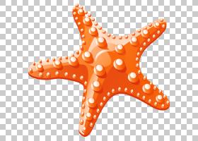 海星,卡通海星材料PNG剪贴画卡通人物,海滩,动物,橙色,漫画,封装