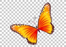蝴蝶,透明橙色蝴蝶,橙色,棕色和白色蝴蝶PNG剪贴画刷脚蝴蝶,卡通,