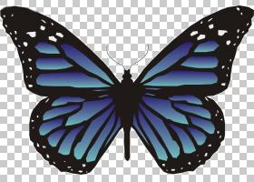 蝴蝶动画,蓝蝴蝶PNG剪贴画蓝色,白色,刷脚蝴蝶,对称性,昆虫,颜色,