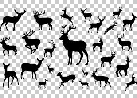 驯鹿剪影,鹿剪影PNG剪贴画鹿茸,哺乳动物,动物,长颈鹿,动物群,野
