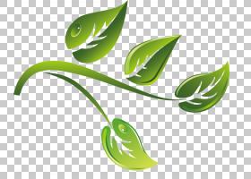 绿茶,绿茶分支材料卡通PNG剪贴画卡通人物,叶,树科,分支,茶,计算