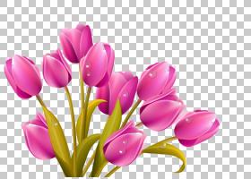 郁金香花束,卡通紫色郁金香材料PNG剪贴画卡通人物,紫色,插花,颜