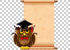 老师版税,学校摄影,猫头鹰PNG剪贴画动物,脊椎动物,猫头鹰,卡通,