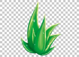 芦荟光栅图形,绿色芦荟PNG剪贴画叶,海报,拖放,电脑壁纸,草,绿苹