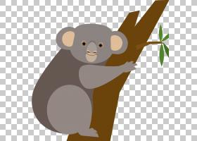 考拉熊欧几里德,卡通考拉PNG剪贴画卡通人物,哺乳动物,动物,carni