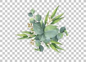 胶树欧氏叶花,水彩绿叶,绿叶植物PNG剪贴画水彩画,水彩叶子,叶子,