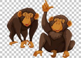 长臂猿灵长类动物猴子,顽皮猴子PNG剪贴画哺乳动物,动物,猫像哺乳